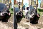 Cướp bị nạn nhân lái xe van chèn vào cột biển báo chết thảm