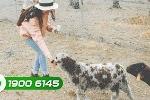 Mục sở thị trại thú độc nhất vô nhị ở Việt Nam