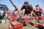 Bộ Y tế thông tin mới nhất chất lượng hải sản 4 tỉnh miền Trung