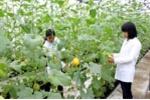 Học viện Nông nghiệp Việt Nam: Đột phá nâng cao chất lượng đào tạo