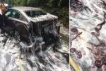 Khiếp đảm cảnh 3,5 tấn lươn sống tràn ra cao tốc, gây tai nạn liên hoàn