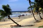 Con trai bất lực nhìn mẹ bị đàn chó hoang hơn 100 con cắn xé trên bãi biển