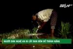 Clip: Dân Nghệ An đi cấy đêm để tránh nắng