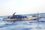 Cận cảnh trục vớt cá voi khủng ở Nghệ An