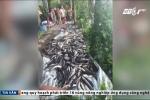 Cá chết hàng loạt, nghi bị đầu độc: Công an vào cuộc điều tra