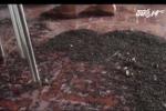Clip:  Hãi hùng bọ đầu đen nhung nhúc trong nhà dân ở Đồng Nai