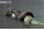 Khám phá loài trăn khổng lồ ăn thịt người ở châu Phi