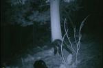 Truy tìm người tuyết Siberia