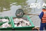 Cá chết hàng loạt ở nhiều địa phương, người phát ngôn Chính phủ lên tiếng