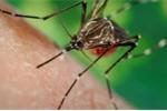 Phát hiện thêm 1 trường hợp nhiễm virus Zika