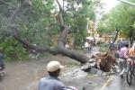 Những hình ảnh khủng khiếp do bão số 8 gây ra