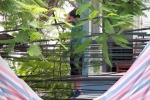 Người nước ngoài chết trong tư thế treo cổ trên cây trước cửa nhà