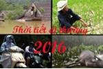 Những hiện tượng thời tiết quái đản, dị thường năm 2016