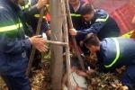 Xe cứu hỏa giải cứu nam thanh niên mắc kẹt trong gốc cây