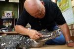 Cụ ông Nhật Bản 34 năm chăm bẵm, 'cưng nựng' cá sấu hơn cả vợ