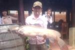 Bắt được cá Lăng 'khủng' hiếm có