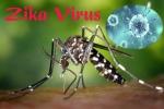 Sở Y tế TP.HCM chỉ đạo phòng chống bệnh do virus Zika