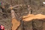 Lãnh đạo tỉnh Đắk Lắk: VTV24 không dàn dựng phóng sự phá rừng