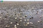 Hải sản chết hàng loạt ở Kiên Giang: Nghi nguồn nước có chứa độc tố