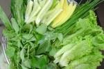 Phát hiện đỉa ký sinh trong phế quản sau ăn rau sống 10 ngày