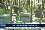 Chuyện thật như đùa ở Hà Tĩnh: Nuôi ong cũng phải nộp phí