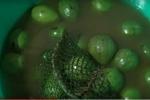Video: Trái cây tươi bán lề đường ướp hóa chất, chủ không dám ăn