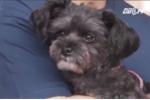 Chú chó trở nên nổi tiếng nhất Hàn Quốc sau 2 năm bị bỏ rơi