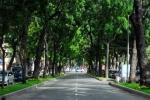 TP.HCM di dời 75 cây xanh để xây dựng đường sắt đô thị
