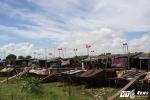 Những 'bông hoa đỏ' lạ mắt sản xuất điện miễn phí ở làng chài Hà Nội
