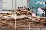 Hải Phòng bắt giữ 16 tấn da ngựa bốc mùi hôi thối nhập lậu từ châu Phi