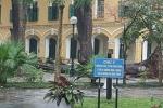 Cây đổ khiến 4 học sinh bị thương, Sở GD-ĐT Hà Nội chỉ đạo khẩn
