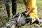 Nam sinh 12 tuổi vật lộn với cá sấu cứu người