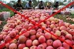 Giật mình số lượng hoa quả Trung Quốc đội lốt hàng Việt