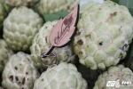 Cận cảnh những quả na 'một người ăn không hết' ở Hà Nội