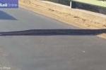Nín thở chờ trăn khổng lồ dài hơn 5 mét uể oải trườn qua đường