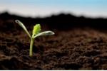 Phát hiện hạt giống 2.000 năm tuổi trong ngôi mộ cổ