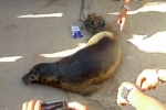 Clip: Quăng lưới bắt cá, tóm hải cẩu 30kg