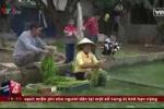 Clip: Hưng Yên thừa nhận nguồn nước rửa rau là nước bẩn