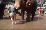 Nữ du khách bị hất tung người khi tắm cho voi