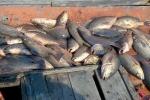 Cuối tháng 8 công bố cá 4 tỉnh miền Trung có thể ăn được hay chưa