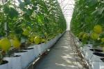 100.000 tỷ đồng làm nông nghiệp sạch sẽ được cho vay như thế nào?