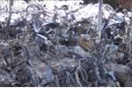 'Bà hỏa' ghé thăm kho tạm giữ xe vi phạm, hàng trăm mô tô bị thiêu rụi