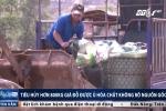 Huế: Tiêu hủy gần 1 tấn giá đỗ ủ hóa chất