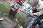 Giải mật hồ sơ chữa bệnh cho 'cụ rùa' Hồ Gươm