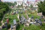 50% điện tích đất nghĩa trang Bình Hưng Hòa được bán đấu giá để xây khu phức hợp cao tầng