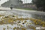 'Mưa vàng' trút xuống Hà Nội sau những ngày nắng nóng khủng khiếp