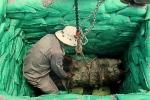 Quảng Trị: Phát hiện quả bom 340 kg dưới ruộng lúa