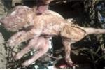 Nhiều 'quái thú' liên tiếp được sinh ra ở Argentina