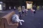 Cười vỡ bụng với bộ dạng thất thểu 'chán đời' của chú chó trong công viên
