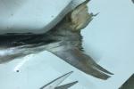 Bóc trần mánh khóe lừa gạt người mua của dân bán cá thu